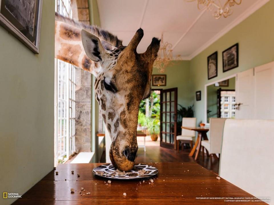giraffe-manor-5